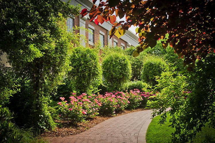 Elizabeth Herring Garden, 2011